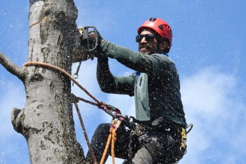Image of tree removal specialist